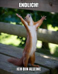 Eichhörnchen: Einsam und allein glücklich